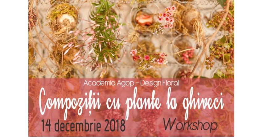 Compoziții cu plante la ghiveci - workshop